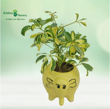 Mini Saplera with Elephant Pot