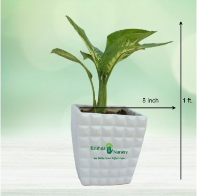 Diffen Plant